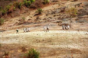 © Giorgio Cosulich. Etiopia 04/2002 - Sulle sponde del Nilo Blu