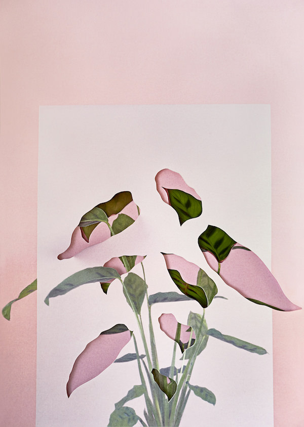 © Alma Haser. Calatheas, 2018