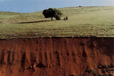 © Abbas Kiarostami