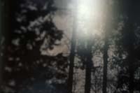 astrid_nippoldt-boschi_malvagi-10