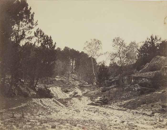 Eugène Cuvelier (1837-1900). Chemin en forêt, clairière. Stampa su carta all'albumina, cm 20 x 25,8. Bibliothèque Nationale de France