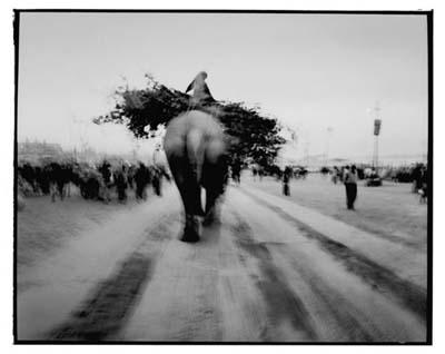 giuliano_radici-elefante1