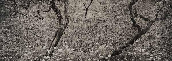 """© Luca Cappellaro e Antonella D'Onorio De Meo. Dalla serie """"Se non avessi visto"""""""