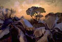 © Peter Fischli & David Weiss. Flowers, 1998. Colour photograph