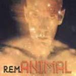 rem-animal-matthew_cullen