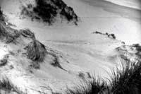 richard_billingham-dune