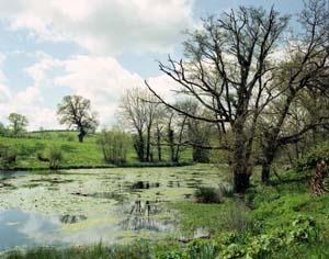 richard_billingham-spring