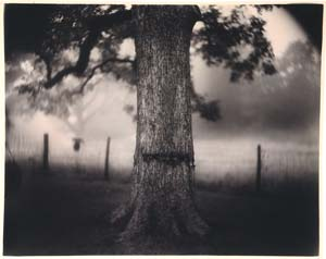 sally_mann-scarred_tree