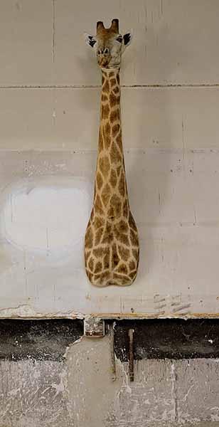 © Sophie Calle. Giraffe Monique, 2012 /Les Autobiographies