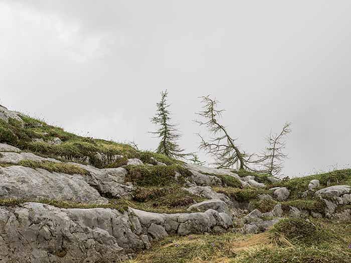 © Stefano Cioffi. Da L'urlo indifferente
