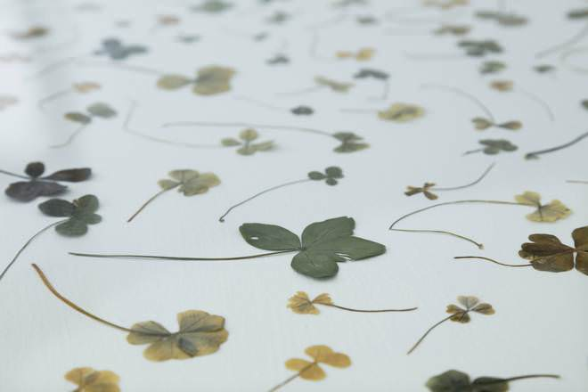 © Tacita Dean. Four, Five, Six, Seven and Nine Leaf. Clover Collection, 1972–present. © Courtesy the artist; Frith Street Gallery, London and Marian Goodman Gallery, New York/Paris. Photo: Augustin Garza