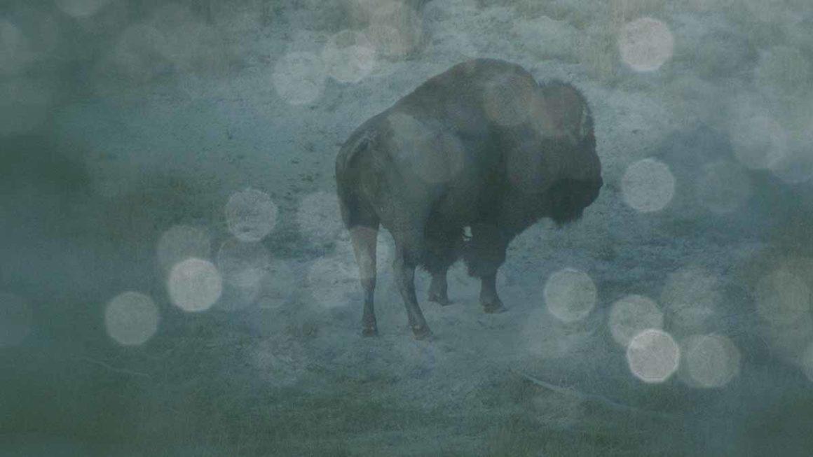 """Visions du Réel 2020, presentato """"Becoming Animal"""" di Peter Mettler"""